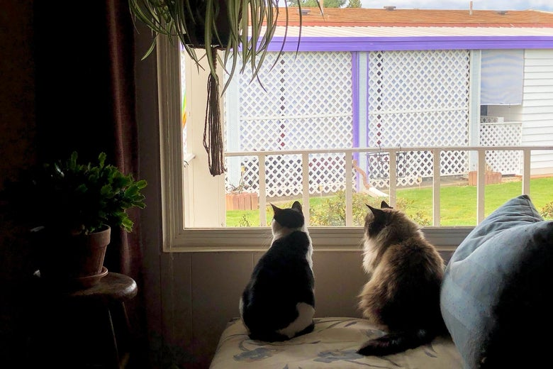 Two cats looking out a window.