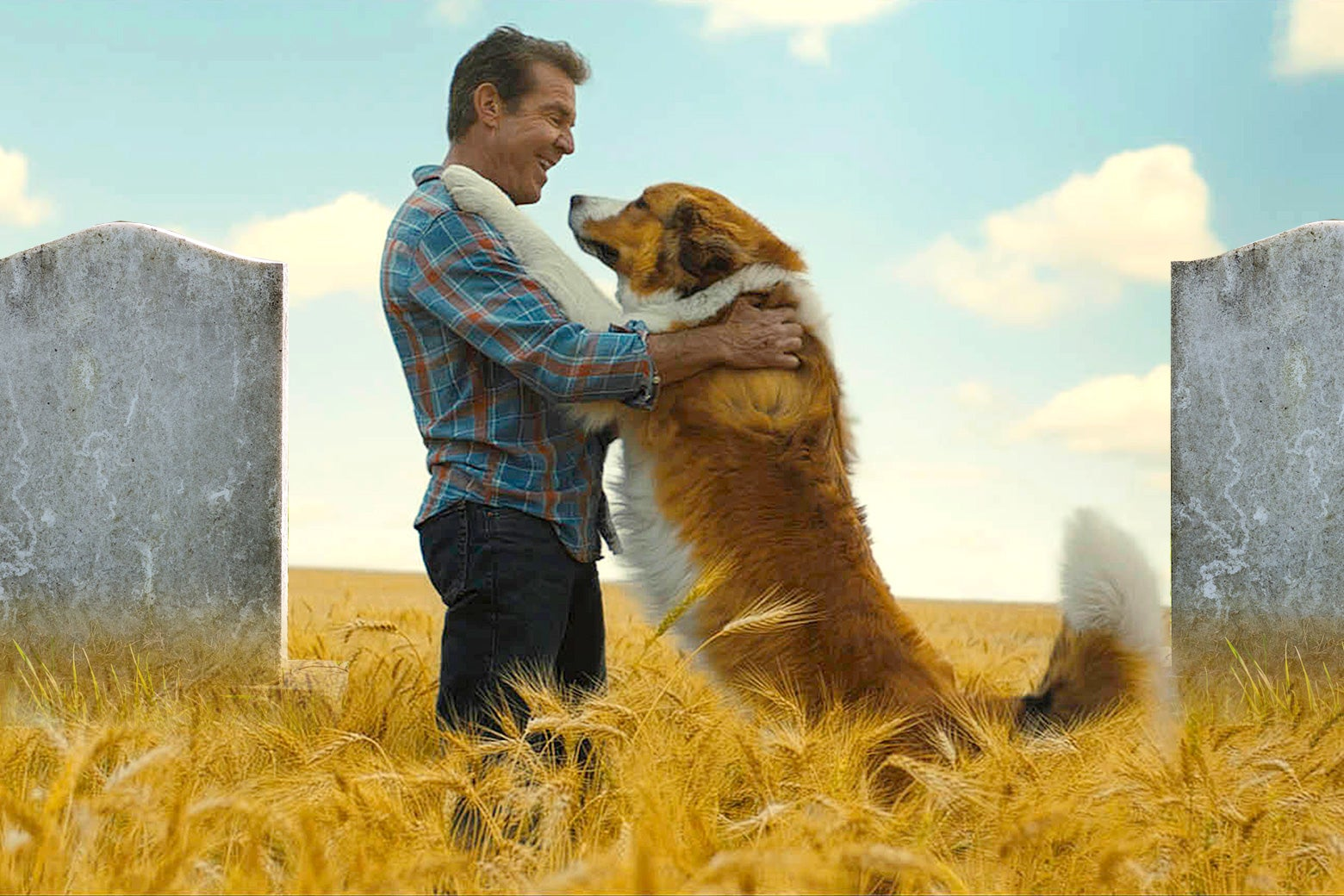 A dog stands up with his paws on Dennis Quaid's shoulders in a field that contains gravestones.