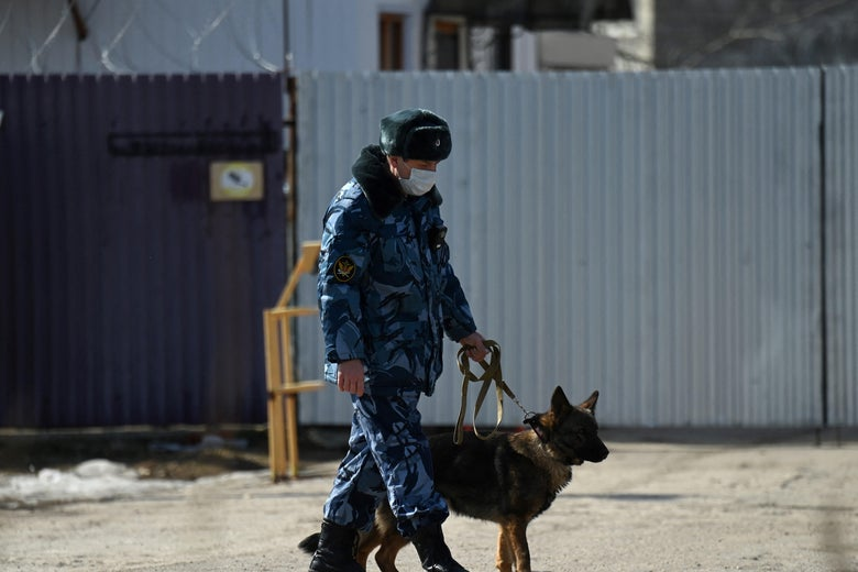 Russian police handler wearing a face mask patrols the entrance to the penal colony N2, where Kremlin critic Alexei Navalny has been transferred to serve a two-and-a-half year prison term for violating parole, in the town of Pokrov on April 6, 2021.