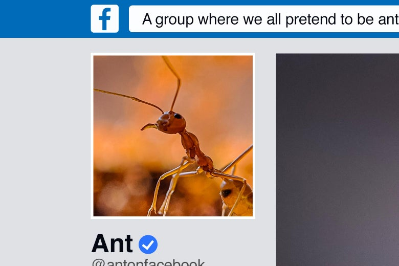 Facebook page of an ant