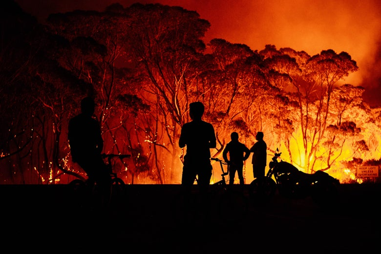 People look as fire burns through trees.