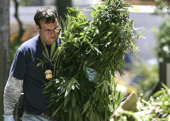 Marijuana seized