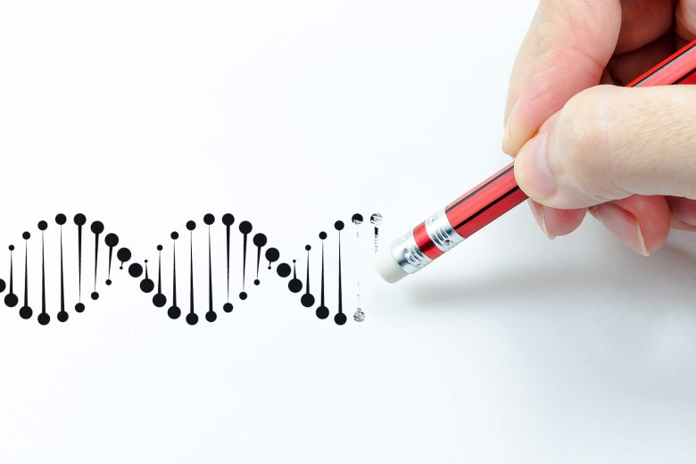 A photo illustration of a pencil erasing part of a double helix
