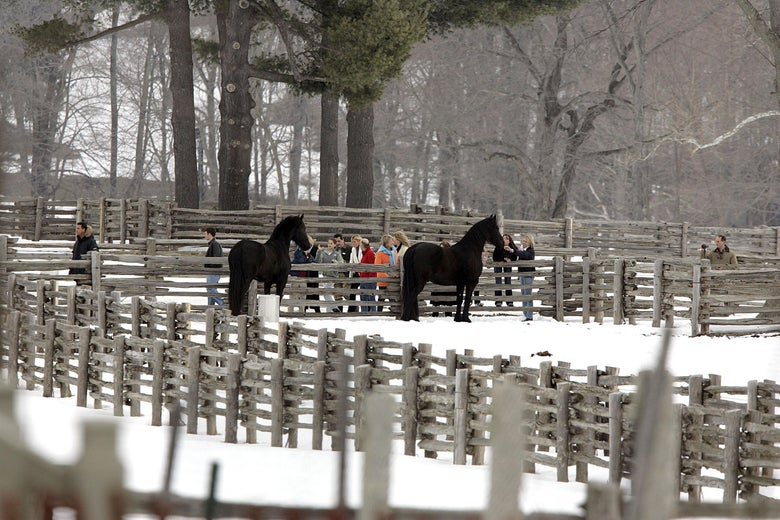 Seen from a distance across snowy fields and fences, framed by a pair of dark horses, Martha Stewart wears an orange jacket and stands with a group of other people.