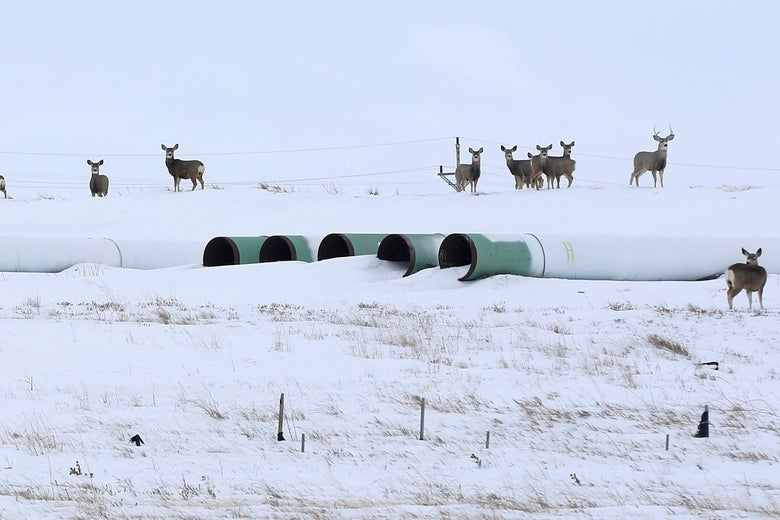 Deer gather amongst pipeline pipes sitting idly in the snow.