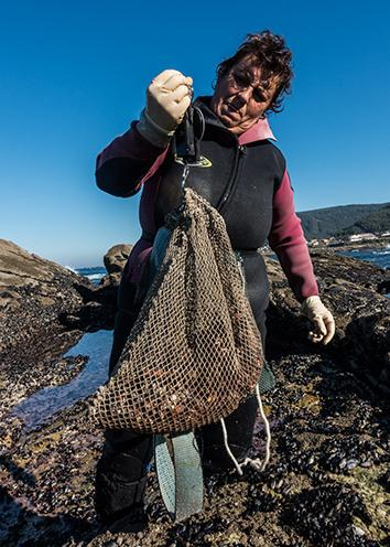 Barnacle foragers in southern Galicia have a quota of three kilograms a day.