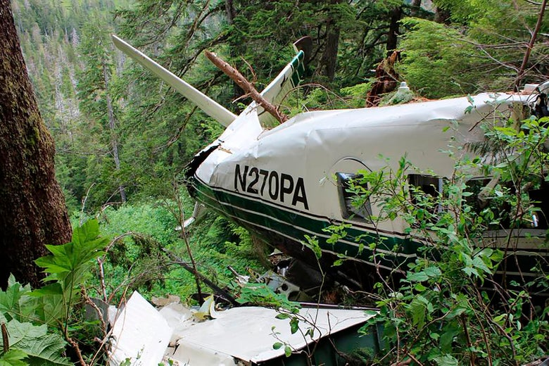A crashed plane in a forest.