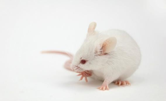 Thousands of lab mice were killed when the Hurricane Sandy storm surge flooded lower Manhattan, setting back medical research for years to come