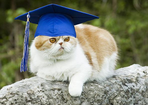 Cat Grad.