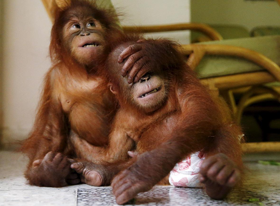 MALAYSIA-ANIMALS/