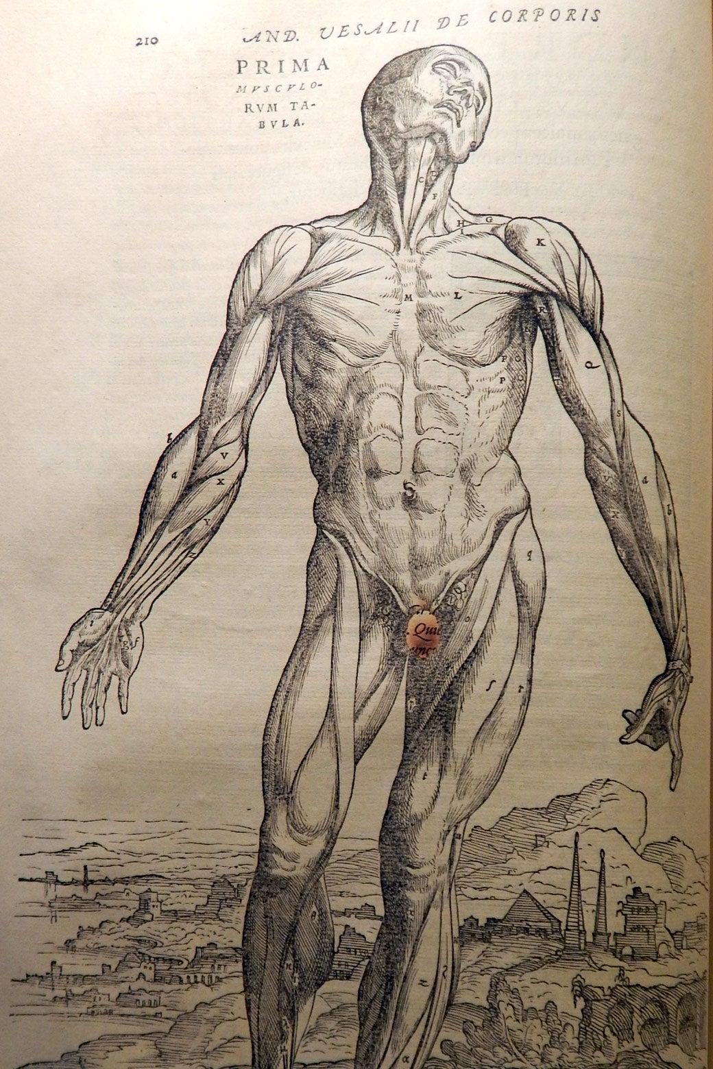 De humani corporis fabrica.