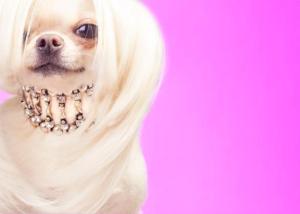 rich dog.