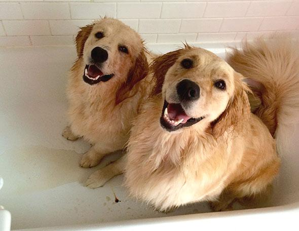 Venkman, left, and Hopper.