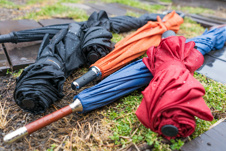 umbrellas on the grass