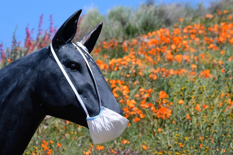 A horse statue with a face mask on and poppies in the background.