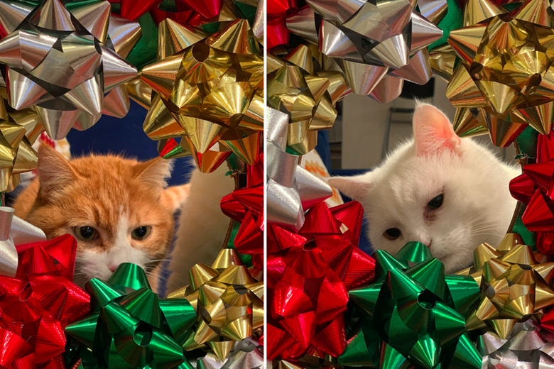 Two more kitties in bows.