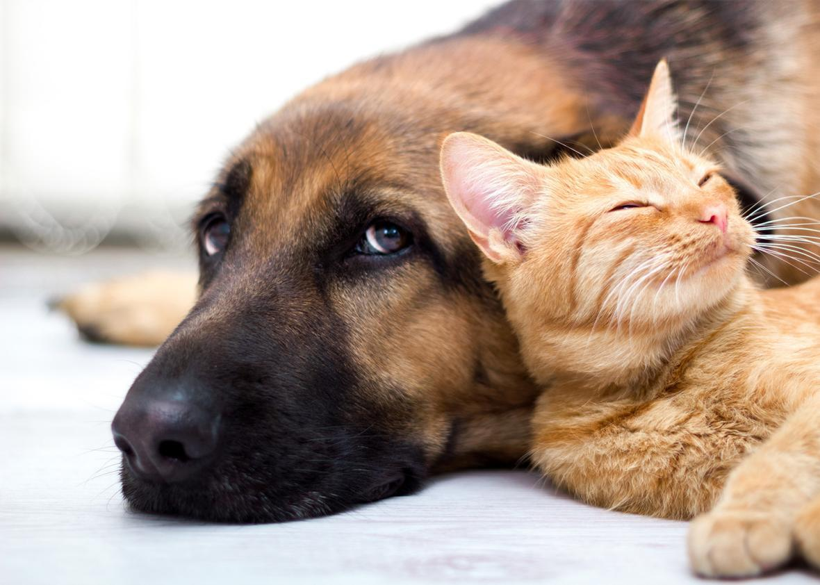 Cat and dog are friends.
