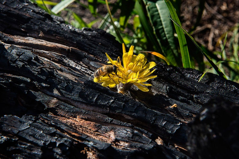 A flower grows out of a burnt tree trunk.