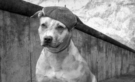 Patriotic dog photo illustration.