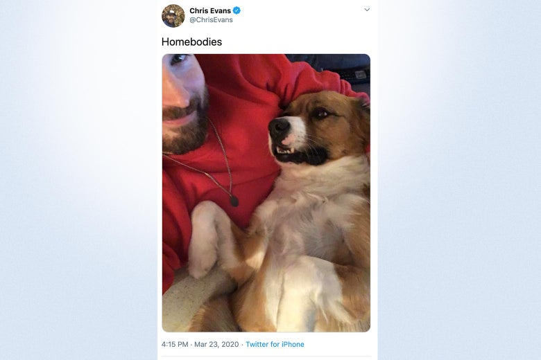Twitter photo of Chris Evans smiling and holding his dog