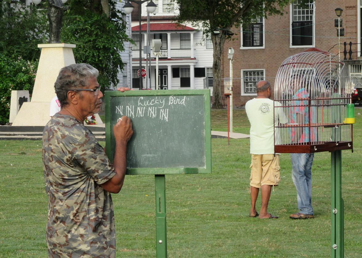 A Surinamese man counts the chirrups of a twa-twa bird.