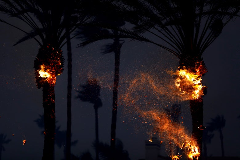 Palm trees on fire.