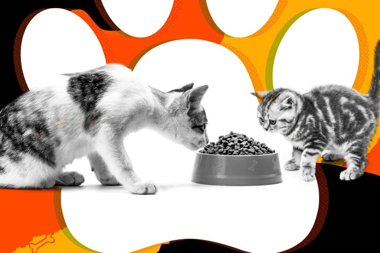 My Cat Is Ravenous. Can I Stop Him From Stealing a New Kitten's Food?