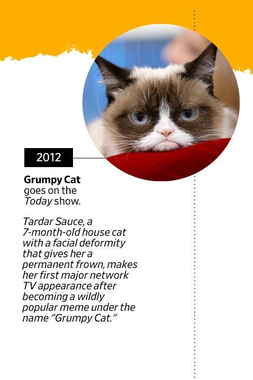 "Photo of Grumpy Cat's face. In 2012, Grumpy Cat goes on the Today show. Tardar Sauce, a 7-month-old house cat with a facial deformity that gives her a permanent frown, makes her first major network TV appearance after becoming a wildly popular meme under the name ""Grumpy Cat."""