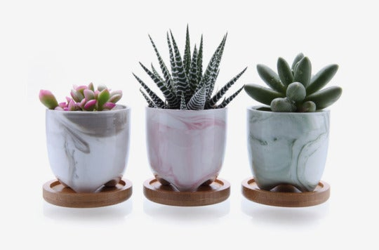 T4U 2.25-inch Ice Cream Plant Pots With Bamboo Trays (Set of 3).