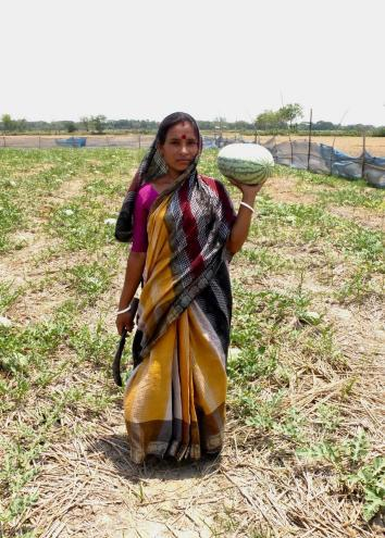 Woman holding a watermelon in Polder
