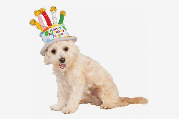 Rubies Costume Company Birthday Cake Hat for Pet