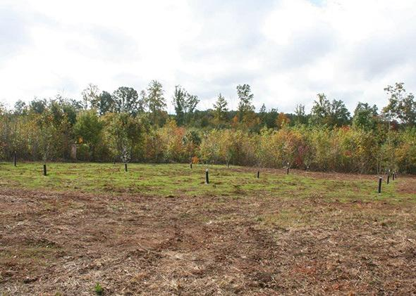 A nascent orchard of fruit trees planted near a private airstrip at Disaster Retreat in central Virginia.