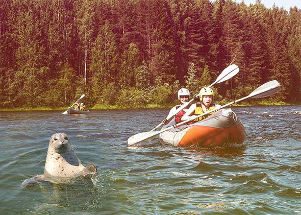 """DOGTOWN: At 1:59 p.m. someone said two kayakers were harassing seals in the lagoon. Deputies found them acting within the law"""