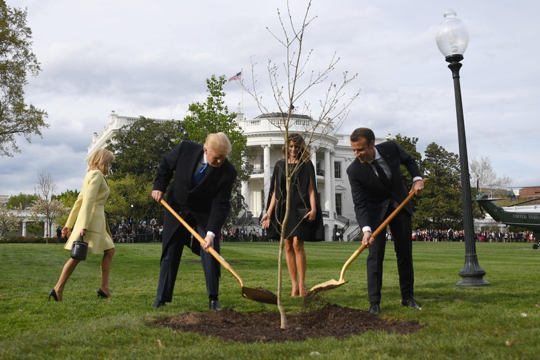 President Trump and President Macron plant a tree