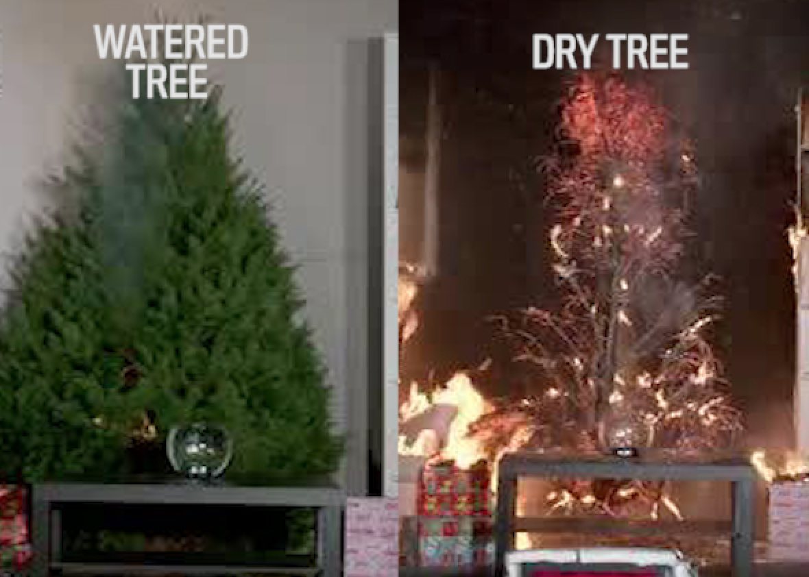 Christmas Tree Fires Are Far Worse If You Don T Water Your Tree