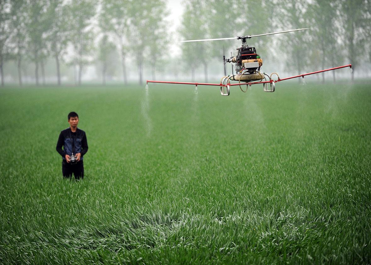 A man controls a drone to spray pesticides on a farm in Bozhou,