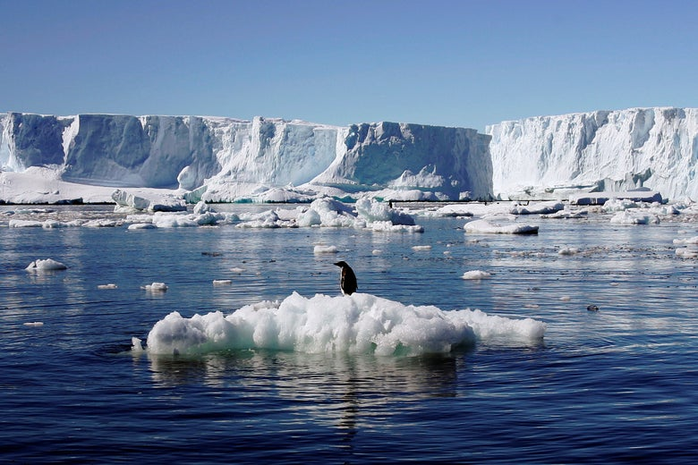 A penguin stands on a block of melting ice, surrounded by water and far-off glaciers.