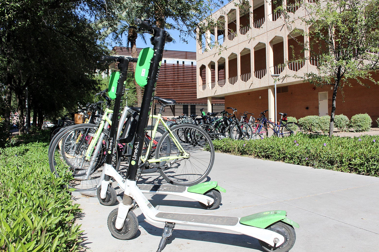 Lines of electric Lime scooters.