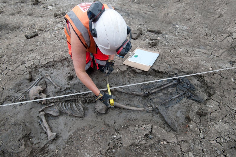 A person in an orange vest and white helmet excavating a skeleton from mud.