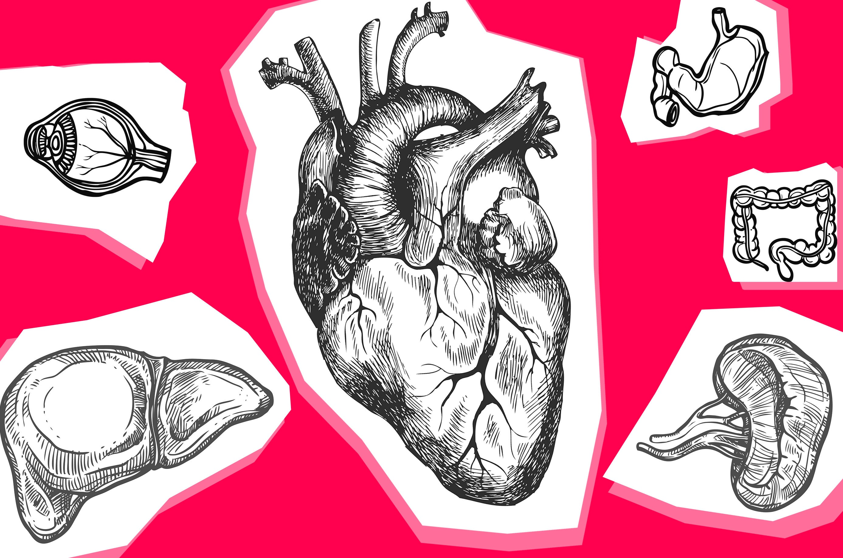Illustrations of various organs, including a heart, eye, and stomach.