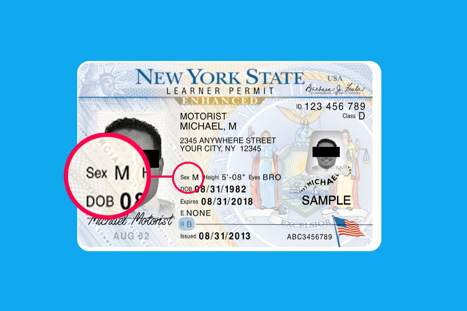 A New York driver's license with the M gender marker pointed out.