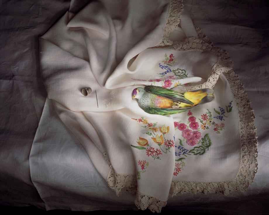 Marian Drew Still Life / Australiana (2003-2009) Rose crowned fruit dove.