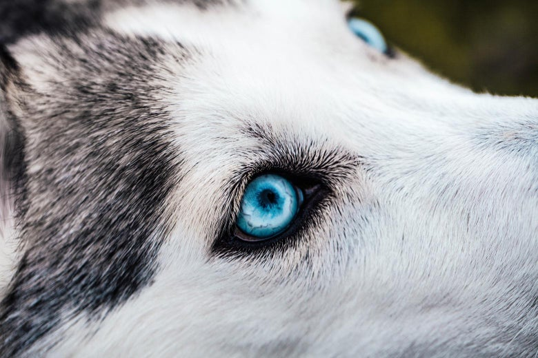 Dog Dna Provided By Owners Has Been Used For A New Kind Of Genomics