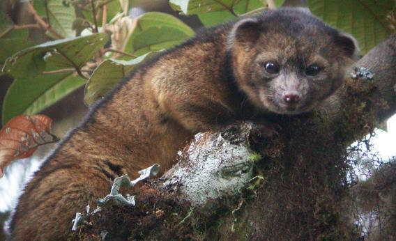 Scientists Discover Adorable New Species Hiding in the Junk Drawer