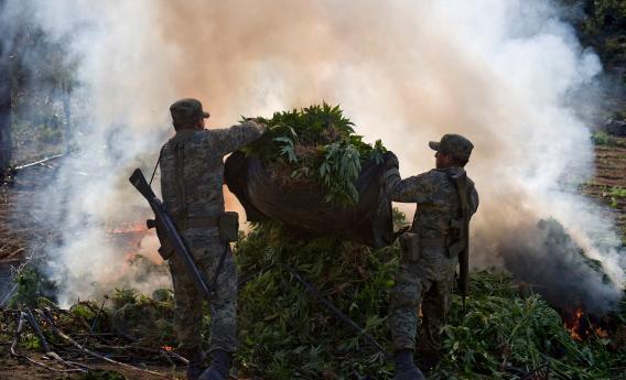 Mexican soldiers burn marijuana plants