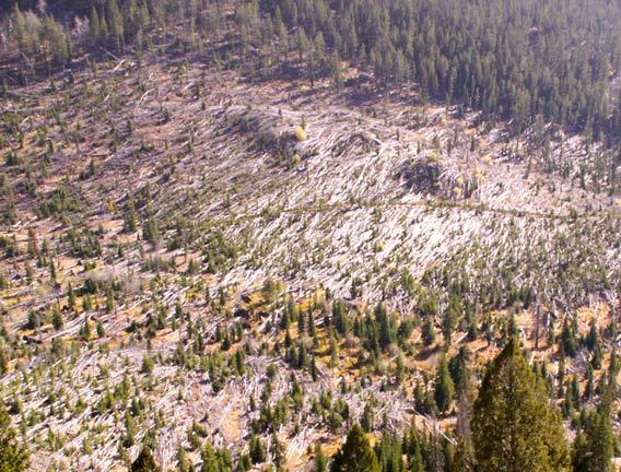 Trees knocked down by a microburst in 1999.