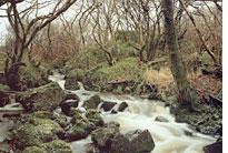 The River Kilbride, the water source for the Ardbeg distillery