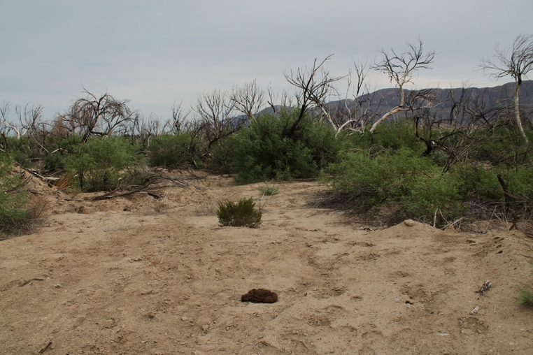 The burnt remains of trees with brush on a desert landscape.