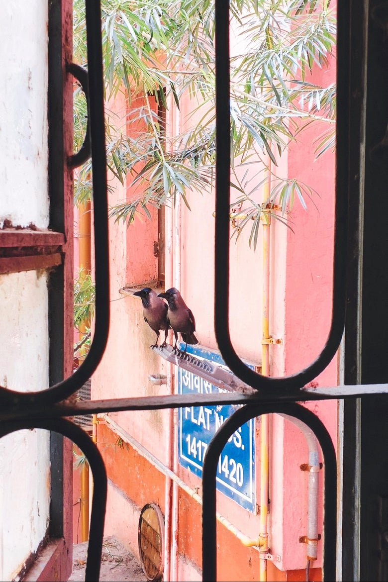 Two birds congregating on a pink building.