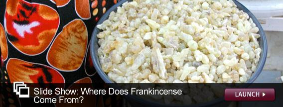 Click here to launch a slideshow on where frankincense comes from.